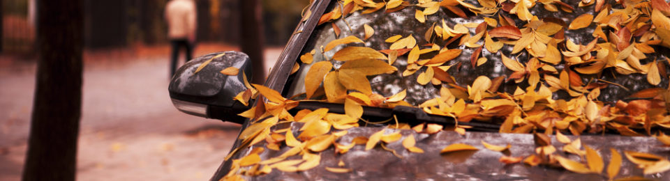 How to Protect Your Car from Fall Leaves