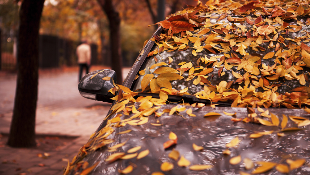 In Amp Out Car Wash Protect Your Car From Fall Leaves In